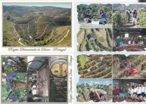 Regiao Demarcada Do Douro Wine Fields Vineyards Portugal 4x Postcard s