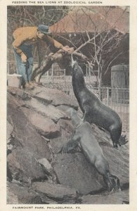 PHILADELPHIA , Pennsylvania , 1910 Sea Lions in Zoo