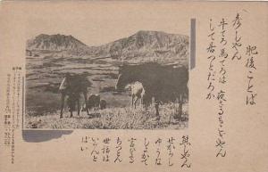 Wild Horse herd , Japan , 00-10s