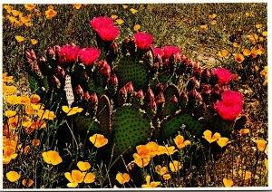 Arizona Springtime In The Desert Prickly Pear Cactus In Bloom