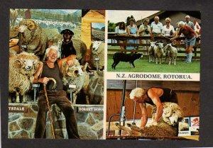 NZ Agrodome Rotorua Sheep Shearing Riverdale Park New Zealand Postcard