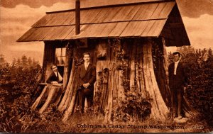 Washington Cabin In A Cedar Stump 1912