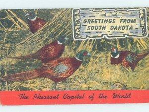 Pre-Chrome PHEASANTS Brookings & Aberdeen & Rapid City & Sioux Falls SD AH6365