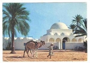 Man Pulling Three Camels, The Mosquee Of Mahboubine, Djerba, Tunisia, 1950-1970s