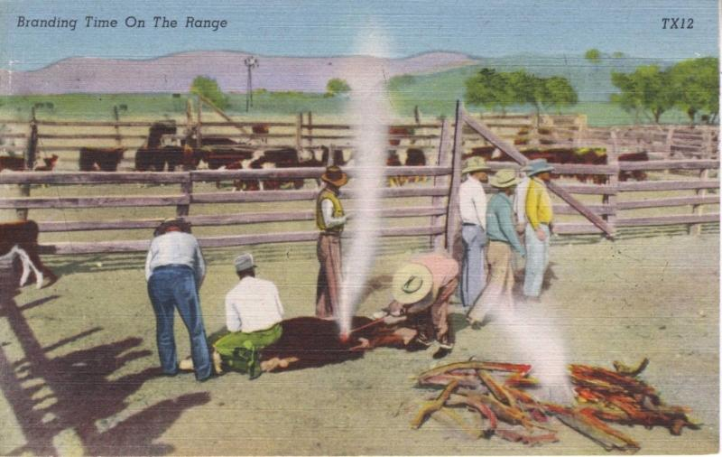 Branding Time On The Range ~ Round-ups Cowboys Ranchers Ranching Linen Postcard