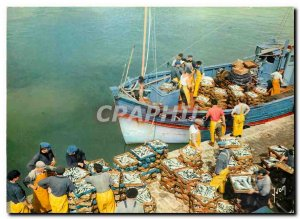 Postcard Modern Colors and Light of France Unloading fish in a port Breton fi...