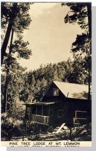 Rare Tucson, Arizona/AZ Postcard, Pine Tree Lodge, Mt Lemmon