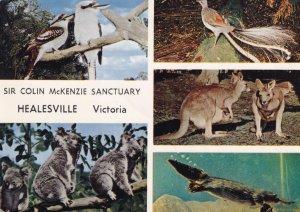 Healesville Victoria Australia Colin MacKenzie Sanctuary Postcard