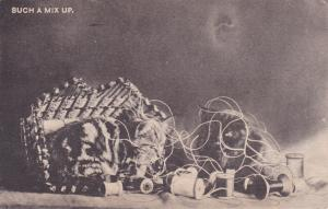 Such A Mix Up - Kittens and Thread - Cats - pm 1907 - UDB