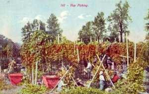 HOP PICKING workers in the field