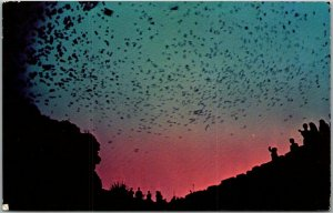 1950s Carlsbad Caverns National Park Postcard Bat Flight from Natural Entrance