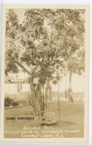 COCONUT GROVE, FL SAUSAGE TREE RPPC REAL PHOTO POSTCARD