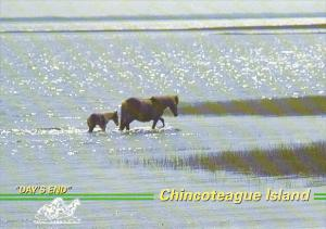 Wild Pony Mare and Foal at Day's End Chincoteague Island Virginia