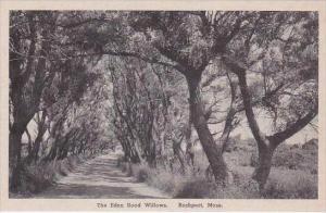 Massachusetts Rockport Eden Road Willows Albertype