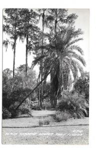 Azalea Garden Winter Park FL Vintage LL Cook Real Photo Postcard c-960 RPPC