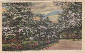 Dogwood In Bloom Atlanta Georgia 1949