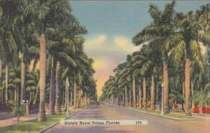 Stately Royal Palm Tree Lined Street In Florida 1946