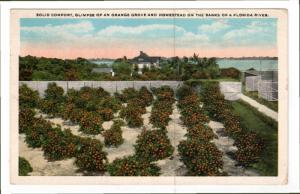 FLORIDA, PU-1922; Solid Comfort, Glimpse Of An Orange Grove And Homestead On ...