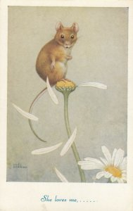 AS: Noel Hopkins, Mouse picking petals off Daisy, She loves me..., 1900-10s