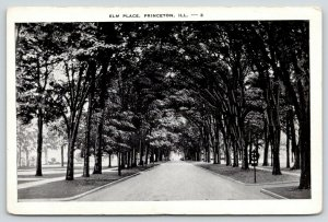 Princeton Illinois~Elm Place~Road Shaded by Trees~1920s Postcard