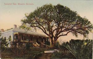 Bermuda Tamarind Vine Warwick