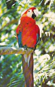 Florida Cypress Gardens Many Varieties Of Wildlife Abound In The Living Fores...