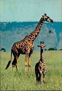IMN00913 wildlife of kenya giraffes africa