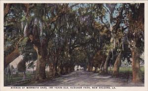 Avenue Of Mammoth Oaks 1000 Years Old Audubon Park New Orleans Louisiana