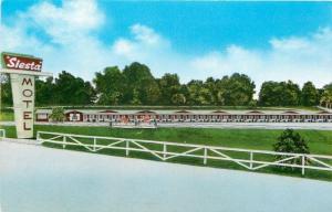 Harrison Arkansas~Siesta Motel~Long Ranch-Style Fence 1950s Postcard