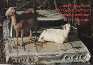 Georgia Humour old GOats Always Vacation In Style