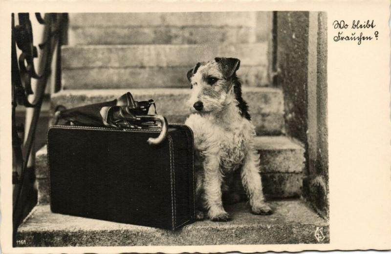 Dog Postcard Terrier (1930s) RPPC (5)