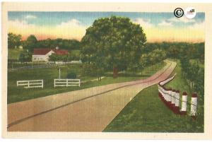 Road through Farmland Farmhouse North Carolina Vintage Postcard Linen Postcard