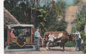 MADEIRA, Portugal, 1900-1910's; Carro De Bois