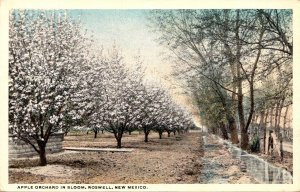 New Mexico Roswell Apple Orchard In Bloom Curteich