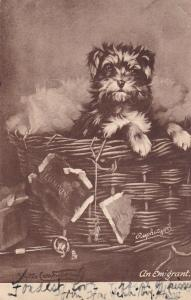 AS: Carrington; Puppy in a basket , An Emigrant,  PU-1904; TUCK 2802