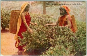 Postally Used 1937 SRI LANKA Postcard The Tea Bush and Pluckers at Work CEYLON