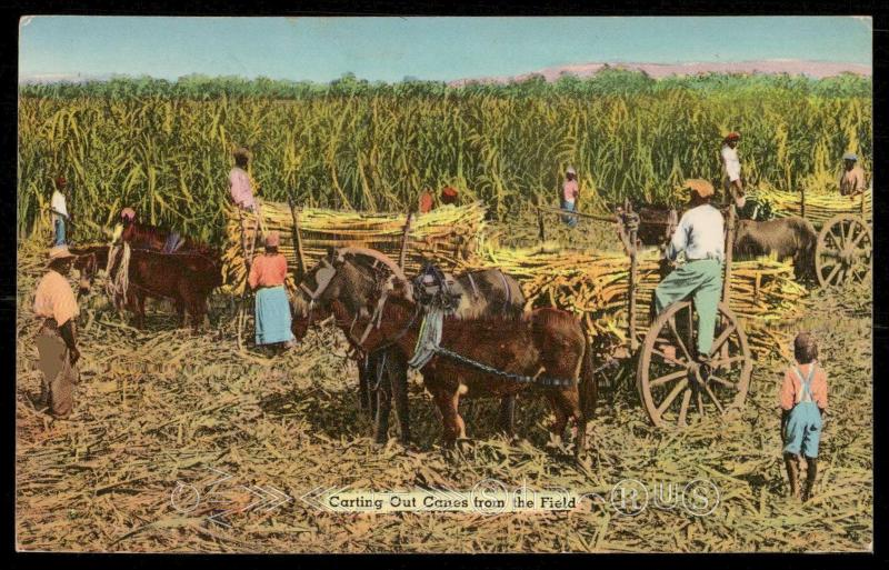 Greeting from Jamaica, B.W.I. - Carting Out Canes from the Field