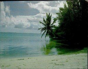 JD0013 maldives islands arabian sea indian ocean palm tree sand beach