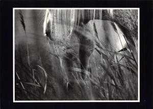 Postcard Fragments Photography No.6 Summer Grazing, Horse 1989 OS10