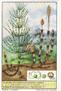 Liebig Trade Card s1693 Prehistoric Plants Still Surviving No 2 Paardestaart ...