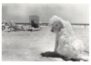 Postcard Lois, Rockaway Beach, New York, 1982 by Barbara Alper #55284