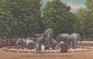 Missouri St Louis Elephant Show Forest Park Zoo Curteich