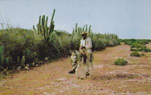 CURACAO, 1940-1960´s; Typical Country Road Scene, Native Man On A Donkey