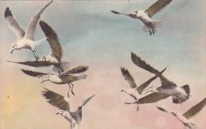 Sea Gulls Acadia National Park Bar Harbor Maine Handcolored Albertype