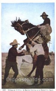 Riding an Outlaw Western Cowboy, Cowgirl Postcard Postcards  Riding an Outlaw