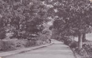 LULON , Bedfordshire , England , 1906 ; Why-ax-Ye Park Road ; TUCK