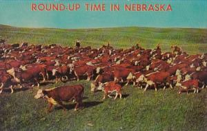 Nebraska Cattle Drive Round Up Time Hereford Cattle