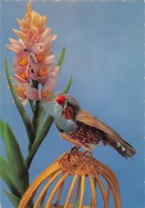 Flower Fleur Bird Blumen