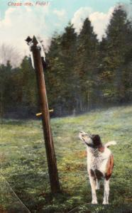 Cat Being Chased By Dog Up Telegraph Phone Pole Antique Comic Humour Postcard