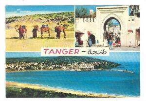 Three-Views, Camels, Panorama Of Tanger, Morocco, Africa, 1950-1970s
